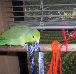 small-parrot-toys