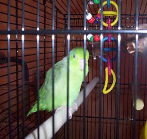 custom-parrot-bird-cage