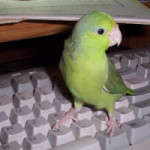 Some Parrotlets Learn to Talk, Chartreuse Prefers toType